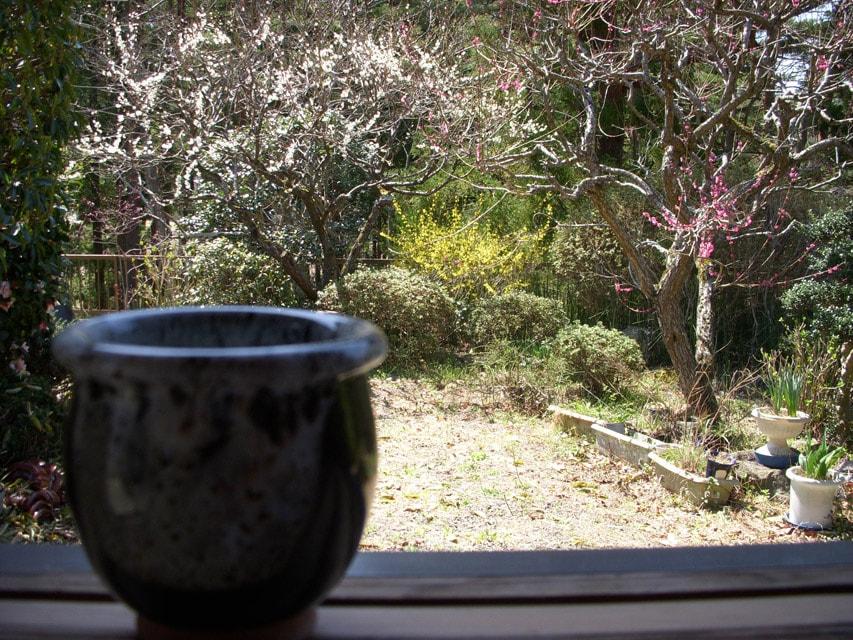 窯場の庭の梅と小甕